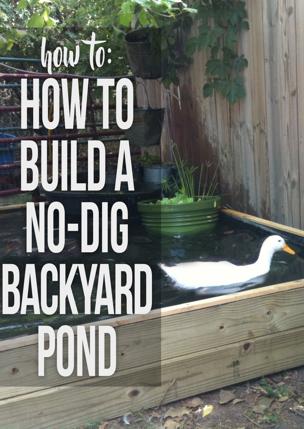 How to Build a No-Dig Backyard Pond for Under $70 - Hawk Hill