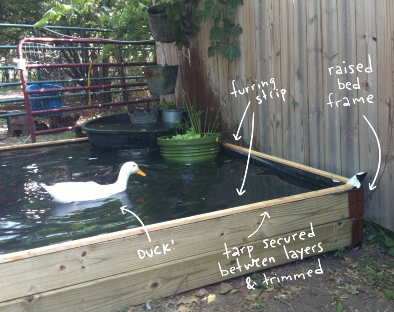 duck in pond, with text overlay illustrating construction.