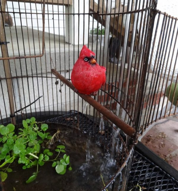 cardinal in birdcage water feature