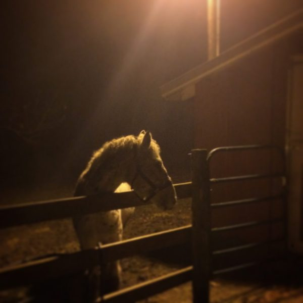 White horse at night bathed in light and shadow