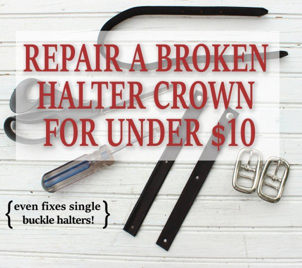 Easy no-sew tutorial for repairing a horse halter crown. Includes instructions to turn a single buckle crown into a double buckle crown, for easier repair.