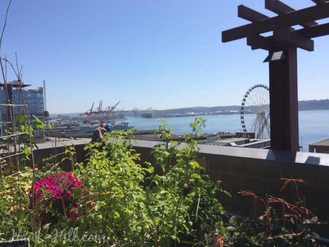 The view from Pike Place Market's secret free rooftop garden