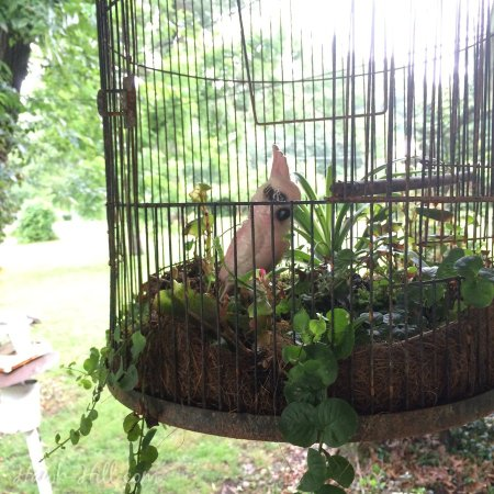 Vintage Bird completes this Birdcage turned Planter