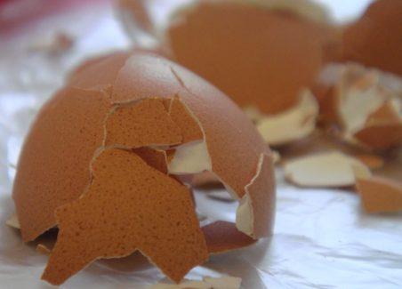 eggshell broken by hen in nesting box