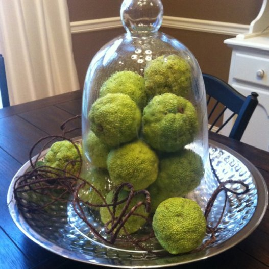osage orange in a good example of an item that can be foraged and resold for profit