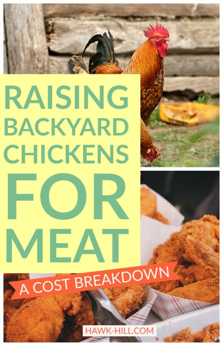 Is it profitable to raise a few meat birds at a time? One backyard's cost-by-cost breakdown