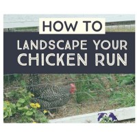 Coop Friendly Plants to Plant in your Chicken Run for Shade and Forage