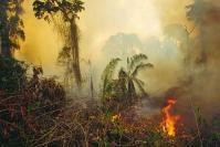 שריפה ביערות הגשם של האמזונס