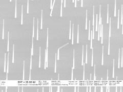 תמונת מיקרוסקופ אלקטרונים סורק של שכבת חוטי ננו. קישור למקור התמונה בתחתית המאמר
