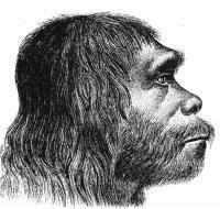 האדם הניאנדרטלי - מתוך ויקיפדיה, איור מהמאה ה-19תמונה בנחלת הכלל