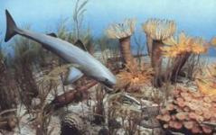 האוקיאנוס בתקופת הדבון. מחקר על התמוטטות החיים הימיים בכדור הארץ לפני 378 עד 375 מיליון שנים מציעה כי המערכת האקולוגית הנוכחית של כדור הארץ הסובלת מאובדן במגוון המינים עלולה להראות גורל דומה. איור: המוזיאון לפלאונתולוגיה, אוניברסיטת מישיגן.