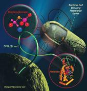 עמידות חיידקים לאנטיביוטיקה. איור: national review of medicine