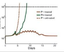 """הגרף מציג את רמות הנויטרופילים בשלושה חולים הסובלים מנוטרופניה. בסיוע של טיפול תרופתי, החולה בעל הנויטרופילים ה""""חזקים"""" (P1) מסוגל להתגבר על הזיהום. לעומתו, החולה בעל הנויטרופילים ה""""חלשים"""" (P4) אינו יכול להתגבר אפילו על זיהום חיידקי קל שמקורו במעיים."""