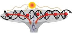 """מערכת פוטוסינתטית מלאכותית הכוללת מולקולות דנ""""א המשולבות יחד עם חומר צבע סטנדרטי. איור: אוניברסיטת קאלמרס בשבדיה"""