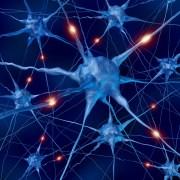 נוירונים בעת פיעילות. איור: L shutterstock