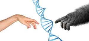 נקודת מבט על האבולוציה האנושית. איור:  shutterstock