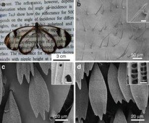 מבנים ננומטריים בכנף הפרפר הביאו לפיתוח מערכות למניעת השתקפות. מתוך המאמר בנייצ'ר