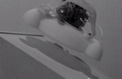 רובוט צפרדע. צילום: מתוך יוטיוב