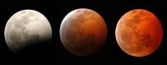 שלבי ליקוי ירח. צילום: Universe Today