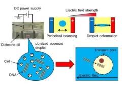 איור המתאר את ההתנהגות של טיפת מים בשמן בתוך שדה חשמלי. [באדיבות: COPYRIGHT (C) 2015 TOYOHASHI UNIVERSITY OF TECHNOLOGY. ALL RIGHTS RESERVED]