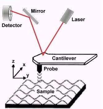 תיאור סכמטי של מיקרוסקופ כוח אטומי - גלאי זעיר בעובי של חוד מחט סורק את פני השטח של הדגימה הנמצאת על גבי מצע נע.