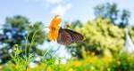 חרקים הם מאביקים יעילים פחות מדבורים, אבל הם מפצים על החיסרון הזה באמצעות ביקורים תכופים יותר בכל פרח. צילום: shutterstock