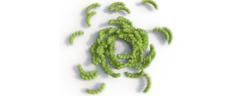 מעל ערך צפיפות חלקיקים מסוים (ריכוז תת-היחידות) התנועה הסיבובית וההתנגשויות בין הפולימרים המפותלים מובילים ליצירה של מבני צברים דמויי-טבעת. [מקור: C. Hohmann (Nanosystems Initiative Munich)]