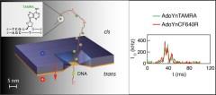 תרשים סכמטי של המערכת ושל מולקולות הדי-אן-איי המצומדות למולקולה סינתטית המושכת אותן דרך החור. מימין: דוגמה לאות האופטי (בשני צבעים) המעיד על רמת המתילציה. באדיבות הטכניון.