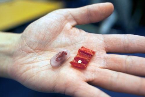 רבוטים בגלולה: חוקרים מן המכון הטכנולוגי של מסצ'וסטס (MIT) בנו אבטיפוס של רובוט המסוגל לבצע הליכים פשוטים בתוך הקיבה ללא חתכים כלל וללא צורך בחיבור לציוד חיצוני: המטופל פשוט בולע את הרובוט. מקור: Melanie Gonick/MIT.