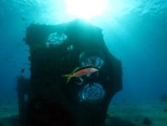 """שונית האלמוגים המלאכותית """"תמר"""". צילום: קרן לוי. באדיבות דוברות אוניברסיטת בן גוריון."""