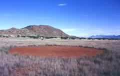 מעגל פיות בנמיביה, 2000. מקור: Thorsten Becker, Wikimedia.