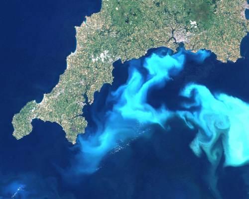 פריחת פיטופלנקטון של המין Emiliania huxleyi, בצילום מן החלל. מקור: Landsat image from 24th July 1999, courtesy of Steve Groom, Plymouth Marine Laboratory.