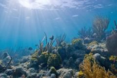 מרבית סוגי האלמוגים יכולים להתקיים רק בעומקים שאליהם חודרת קרינת השמש. צילום: National Park Service.