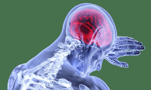 המוח. איור מתוך PIXABAY.COM
