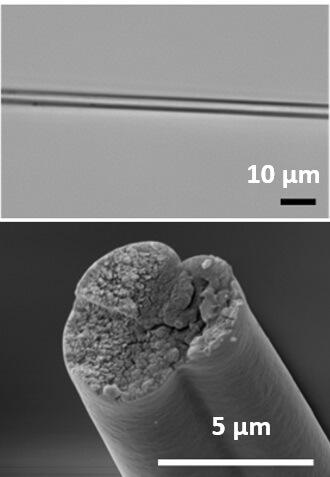 חיידקים מהונדסים מיצרים חלבונים של קורי עכביש שיוכלו לשמש בתור סיבים חזקים [באדיבות: Christopher Bowen]