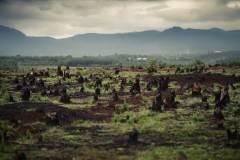 יער שבורא במדגסקר לצרכי שימוש חקלאי באדמה. צילום: shutterstock