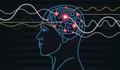 הדלקת תאי מוח רבים בו זמנית בהיפוקמפוס. איור: מעבדתו של פרופ' רפי מלאך, מכון ויצמן