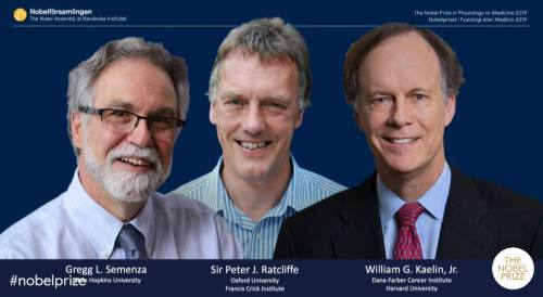 שלושת זוכי פרס נובל לרפואה לשנת 2019, צילום מסך מתוך ההכרזה.