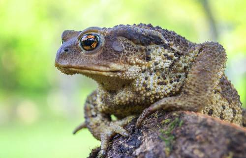 ללמוד מהצפרדעים. איור: shutterstock