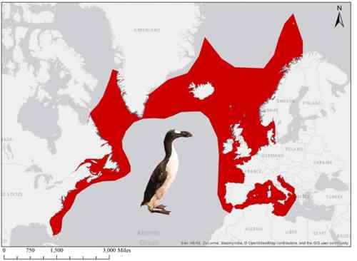 איזור תפוצתו של האוק הגדול - הפינגווין של חצי הכדור הצפוני, לפני שנכחד על ידי האדם. צילום: Esri, Garmin, NOAA NGDC and others, CC BY