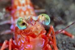 עיני חסילון - צופות על קרקעית הים גם בחשכה. צילום: shutterstock