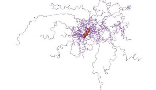 """כאשר התגלו לראשונה מקטעים לא-מסודרים במולקולות חלבון בסוף שנות ה-80 של המאה הקודמת, מדענים נהגו לחתוך ולזרוק אותם. איור: מעבדתו של ד""""ר האגן הופמן, מכון ויצמן"""