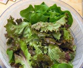 salata-kurutucusu