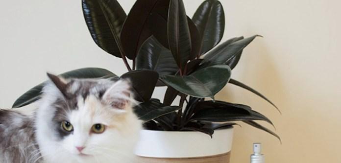 Kedinizi Bitkilerden Uzak Tutabilirsiniz