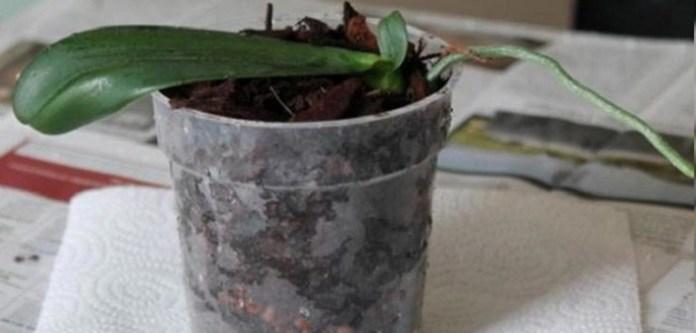Orkideyi Canlandırmanın Yolları