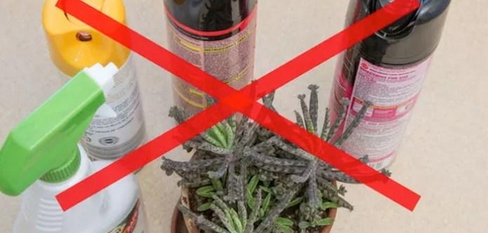 Ev Bitkileri için Ev Yapımı Böcek Spreyi