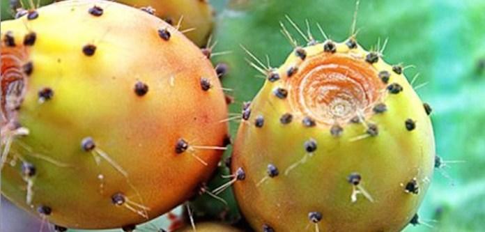 Kaktüs Meyvesini Neden Yemelisiniz