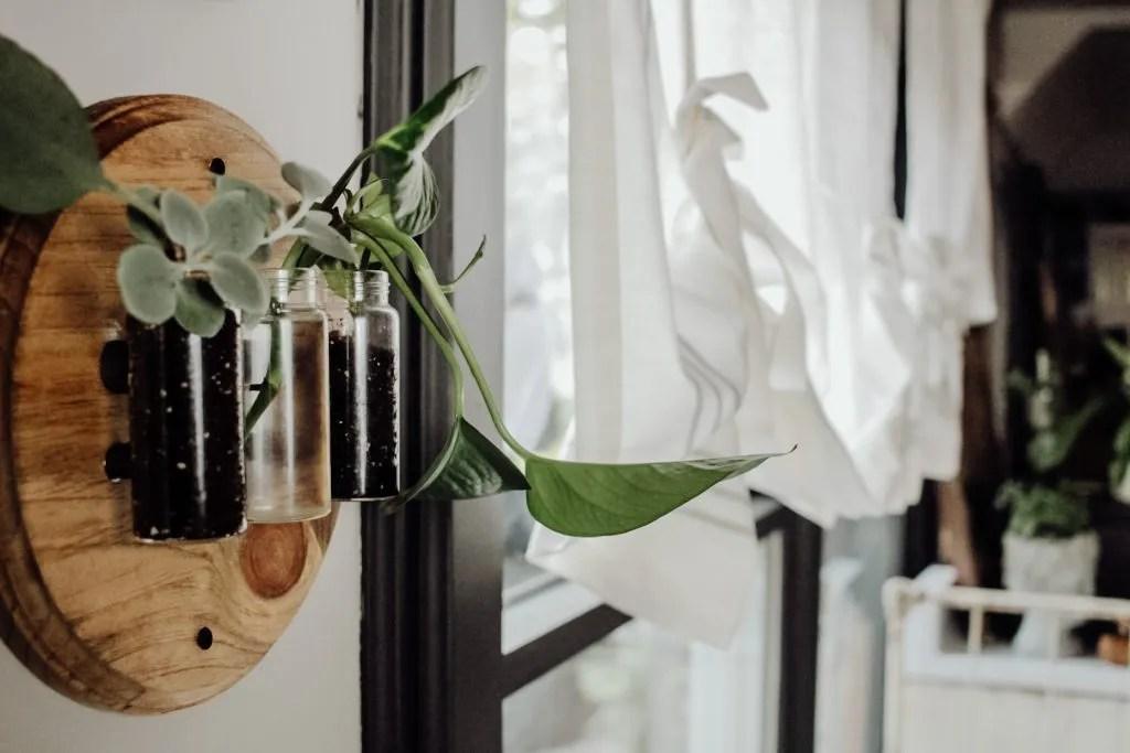 DIY Plant Propagation Station Tutorial