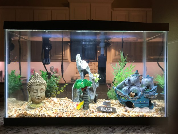 Hayes Family Fish Tank