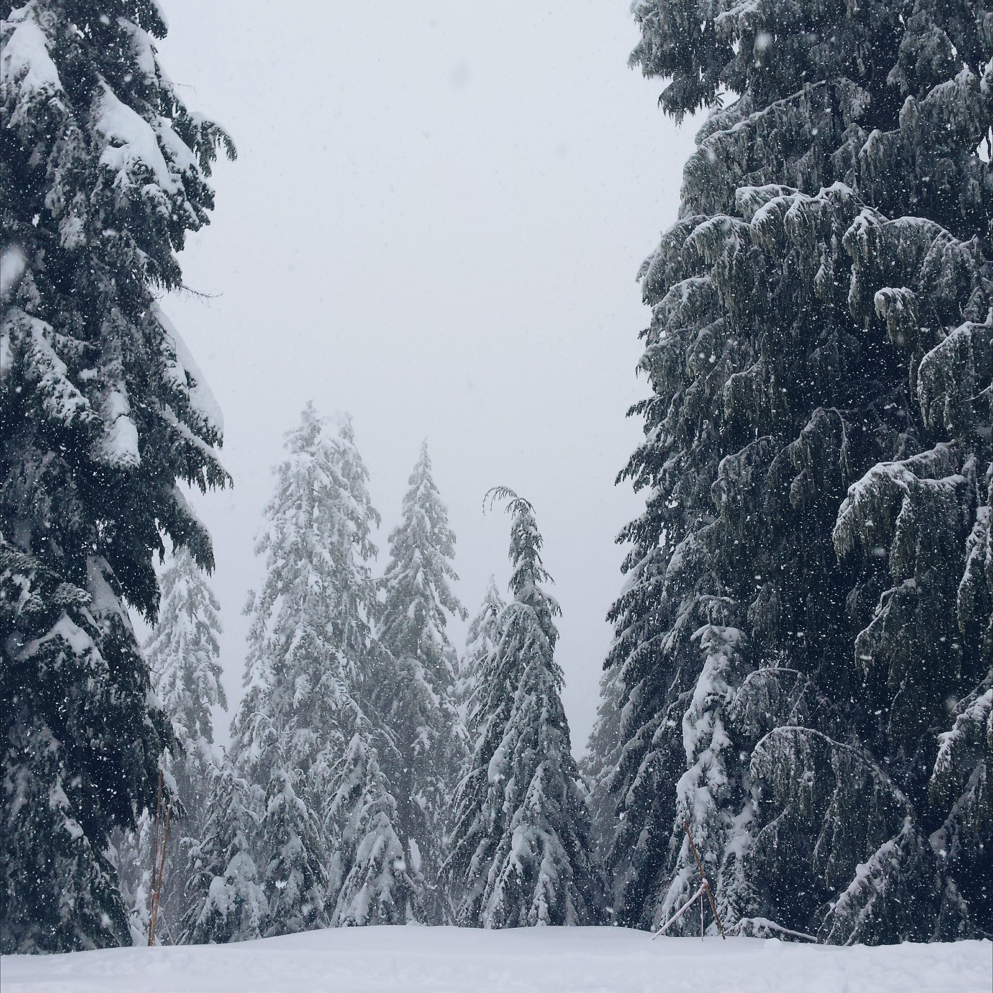Mount Seymour in Vancouver, Canada